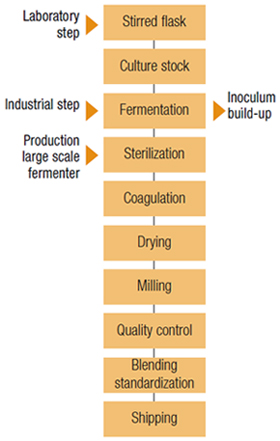 Xanthan Gum Mfanufacturing Process