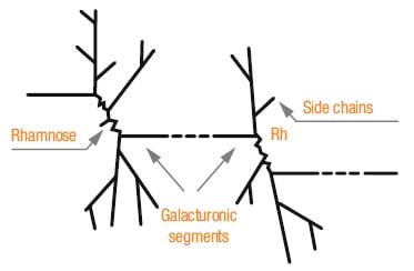 Galacturonic Acid