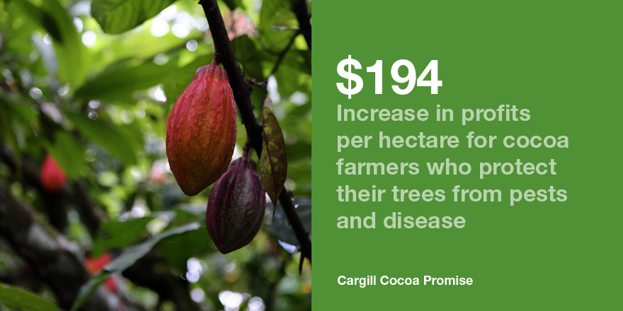 cocoa farmer productivity