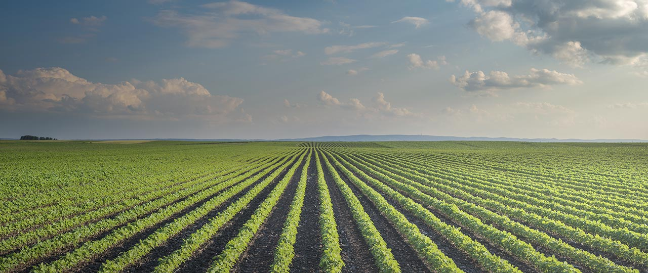 Agriculture Risk Management | Hedge Against Price Volatility