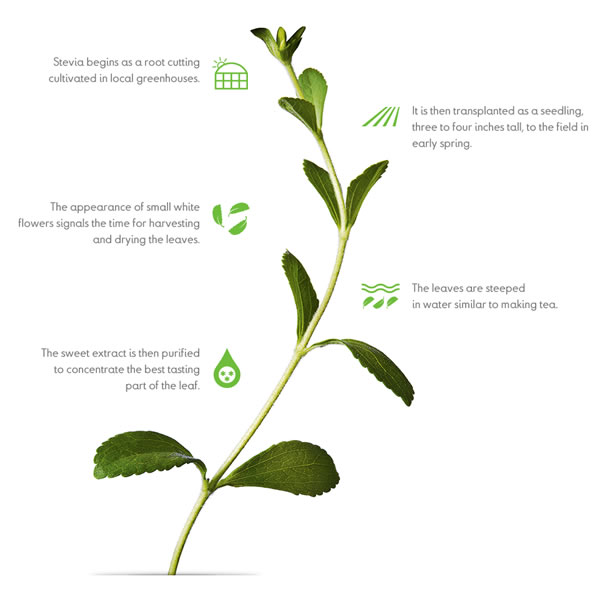 Making Truvia Stevia Leaf Extract