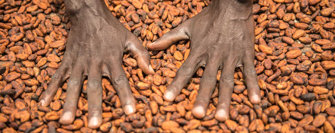 worker hands on cocoa beans