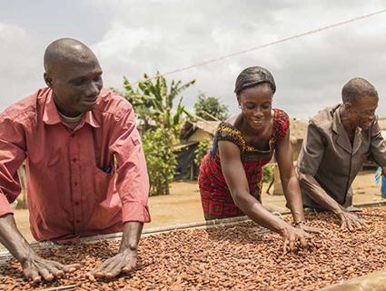 workers spreading cocoa