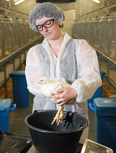 layer broiler feed cargill animal nutrition