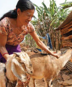 inpage-heifer-international