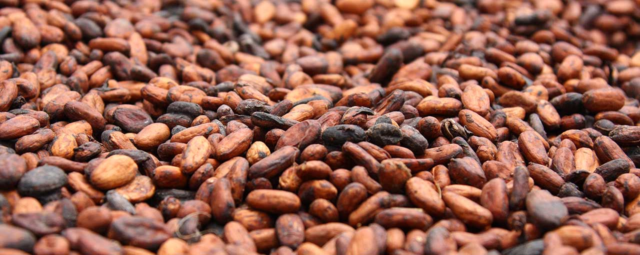 The best cocoa beans