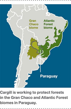 inpage report sustainability south america