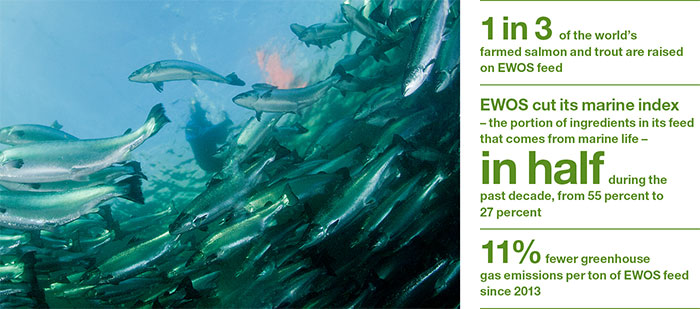 inpage report sustainability fish