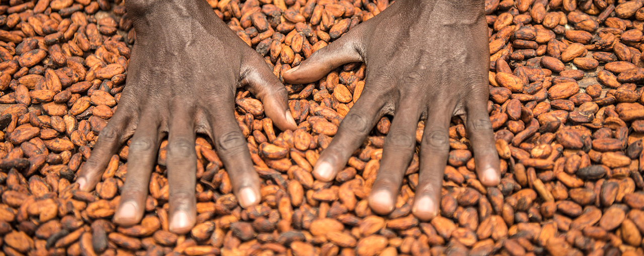 Cocoa Boom and Bust