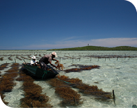 Cargill's Red Seaweed Promise