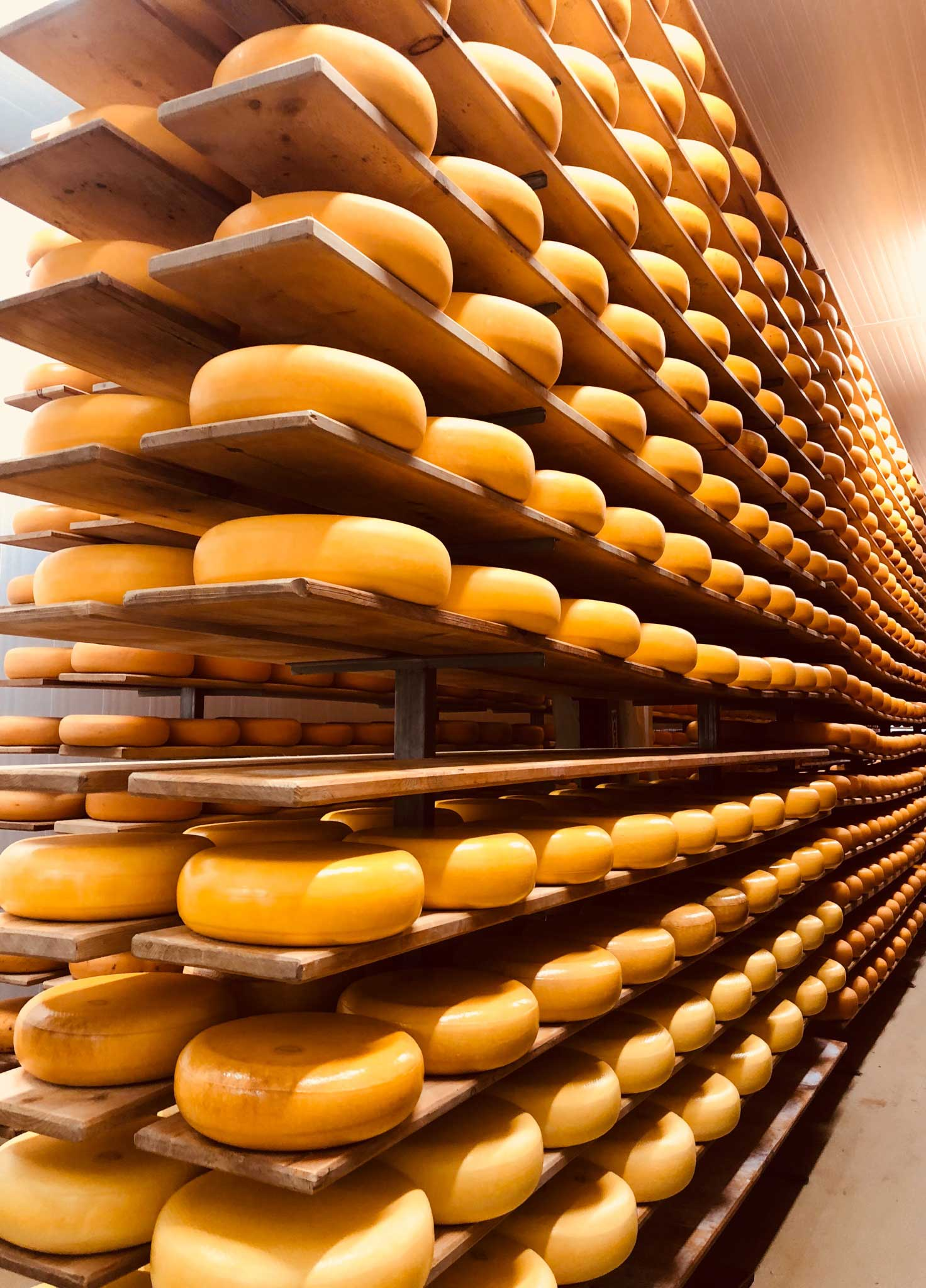 Mountainoak cheese