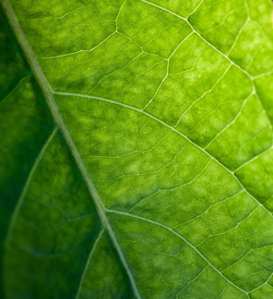 Macro photography of a leaf.
