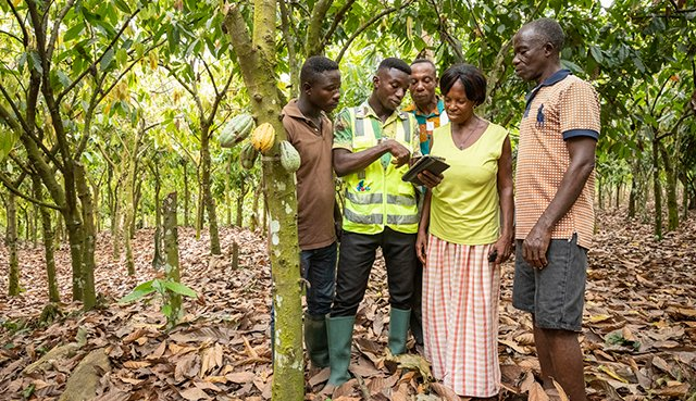 Group of people discussing in a cocoa plantation