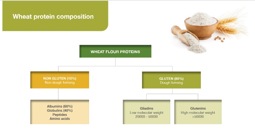 Wheat Protein Composition