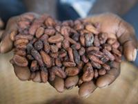 Cocoa beans. Cargill.