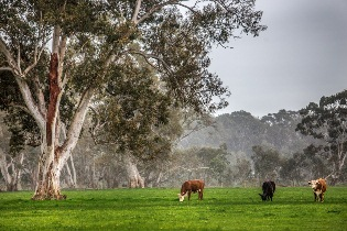Cargill Food Distribution and Teys Australia have entered into an agreement to bring high quality Australian beef to American dinner tables.
