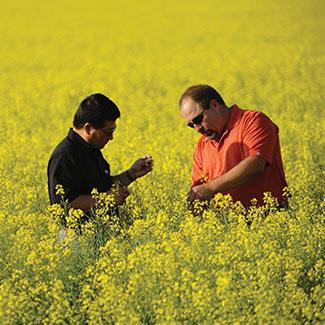 Employees in a field
